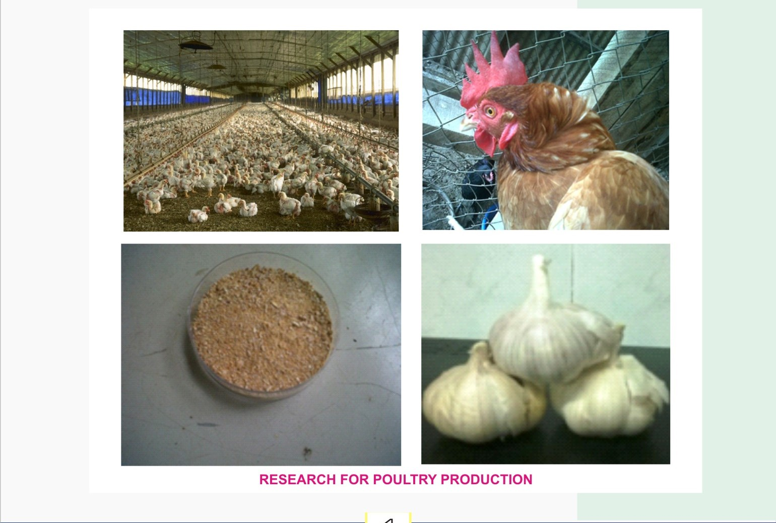 Research for Poultry Production